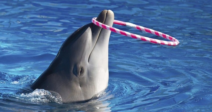 Marmaris Dolphin Show