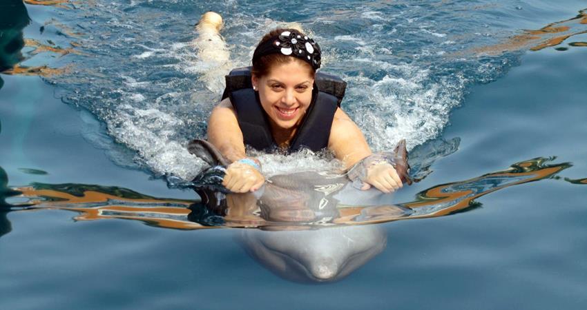 Marmaris Swim With Dolphins