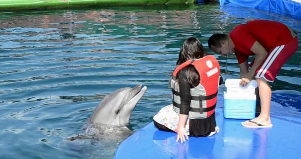Icmeler Meet With Dolphins