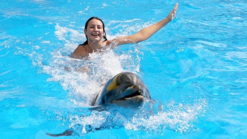 Icmeler Swim With Dolphins