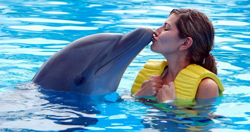 Icmeler Swim With Dolphins