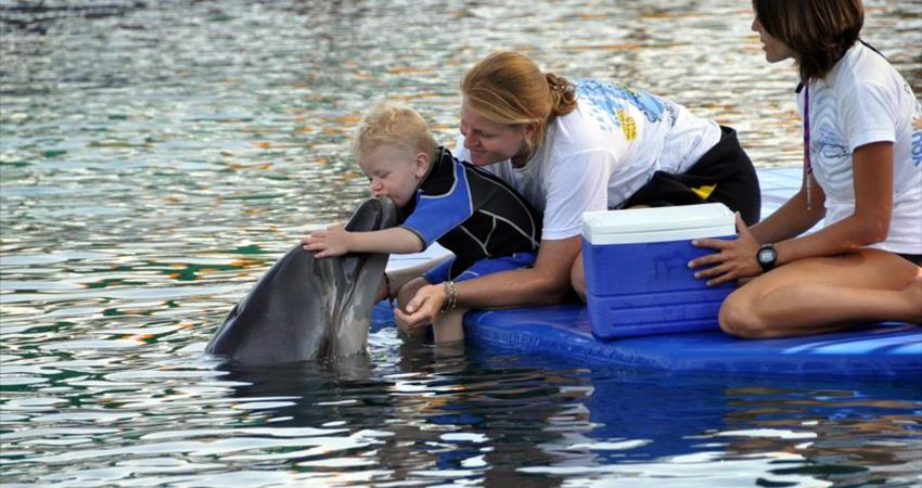 Turunc Meet With Dolphins