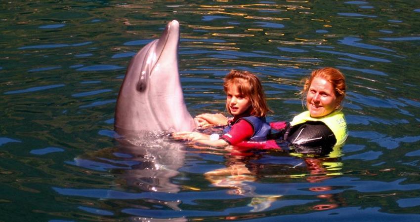 Turunc Swim With Dolphins