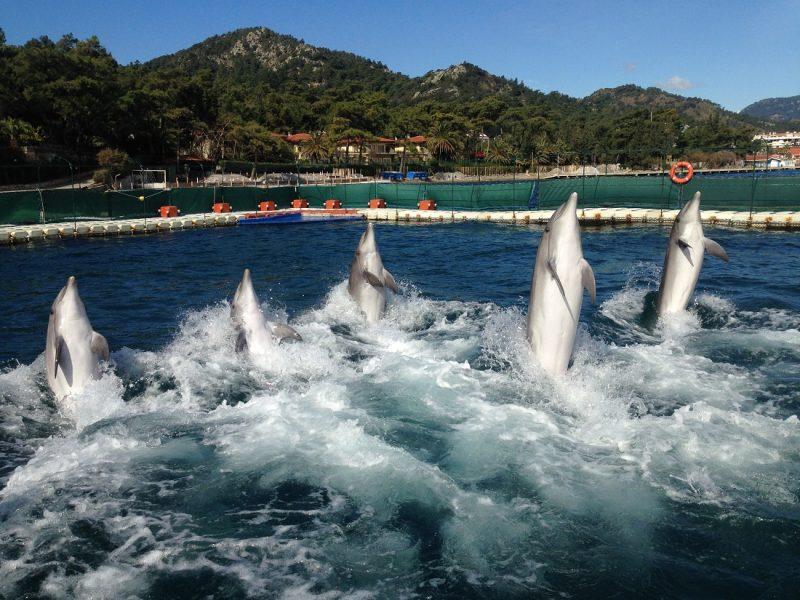 Turunc Dolphin Show