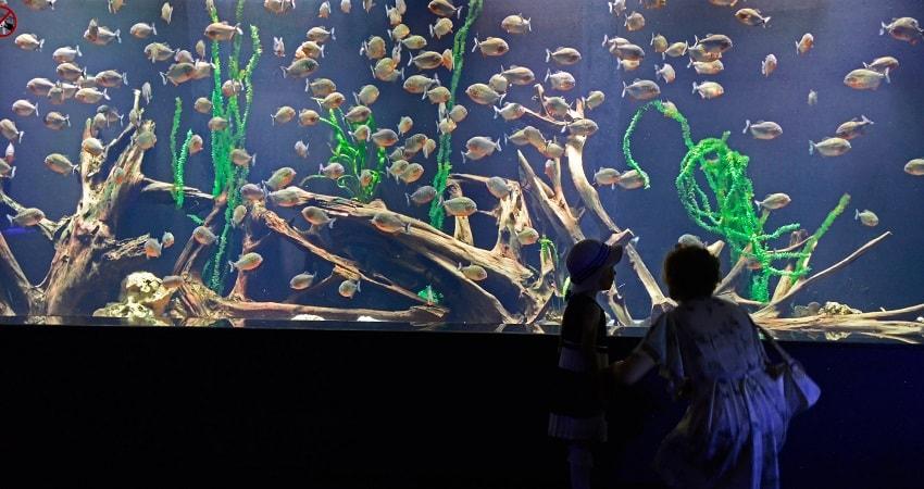Side Antalya Aquarium Tour