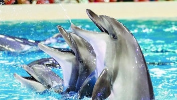 Side Dolphin Show