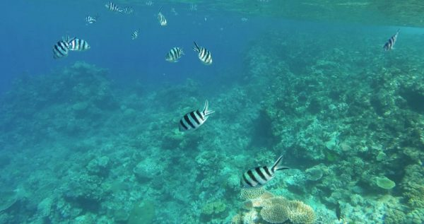Turunc Snorkelling