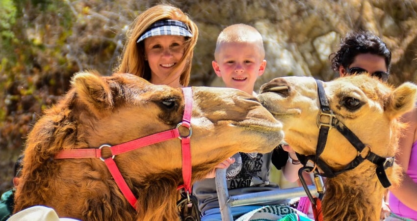 Cappadocia Camel Ride