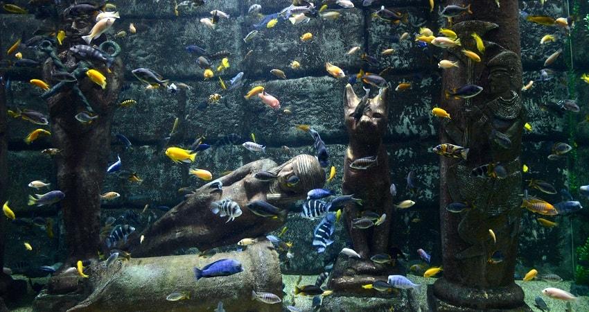 Antalya Aquarium Tour