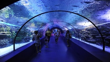 Antalya Aquarium Tour