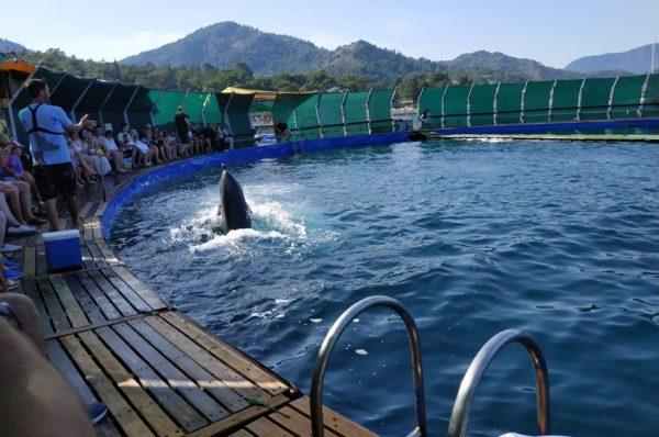 Kemer Dolphin Show