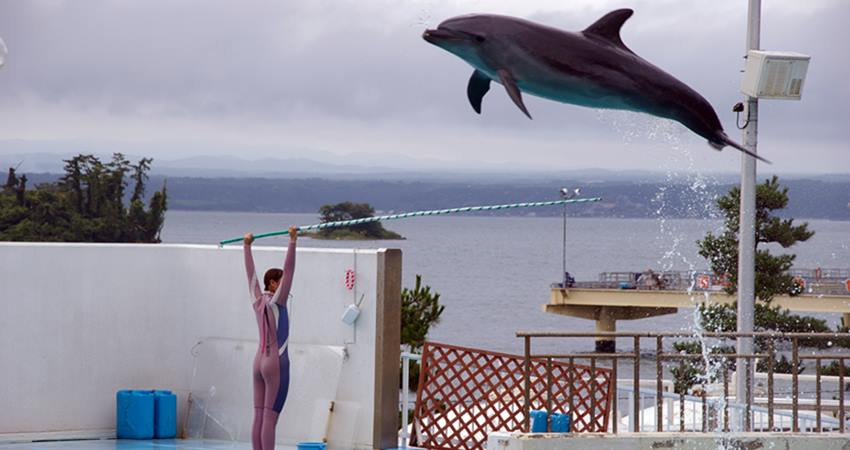 bodrum show dolphin