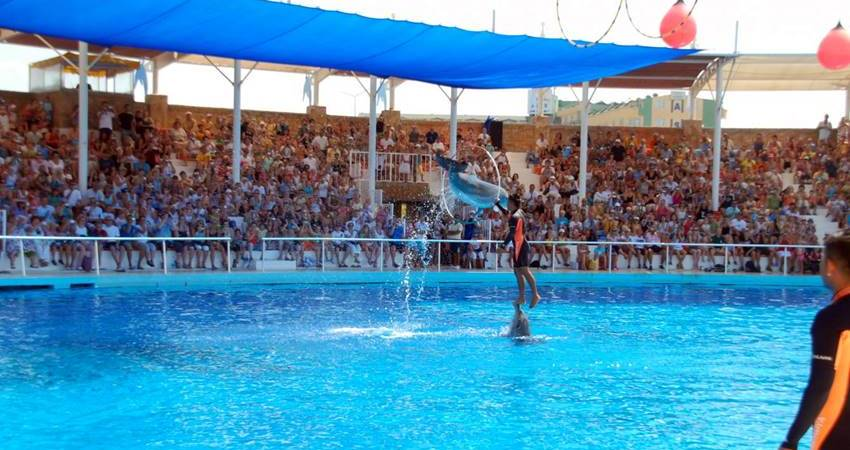 antalya dolphin show