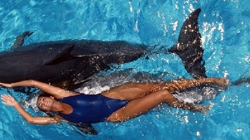 bodrum swimming with dolphins