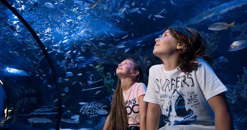 Antalya Aquarium Tour From Alanya